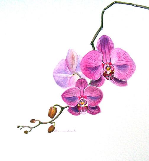 Sharon Way Howard Botanical Quot Orchid Violet Quot