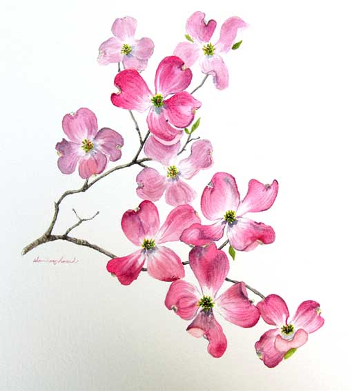 i want to get a tattoo of dogwood flowers my style pinterest dogwood flowers tattoo and flower - Dogwood Flower